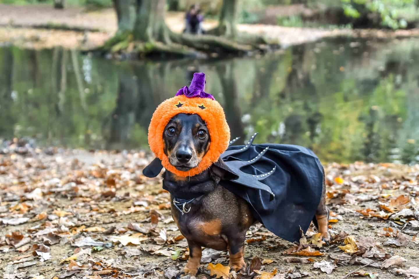 Dog Events In London This Month October 2018 Spooky Special Halloween Dog Pumpkin on Hampstead Heath