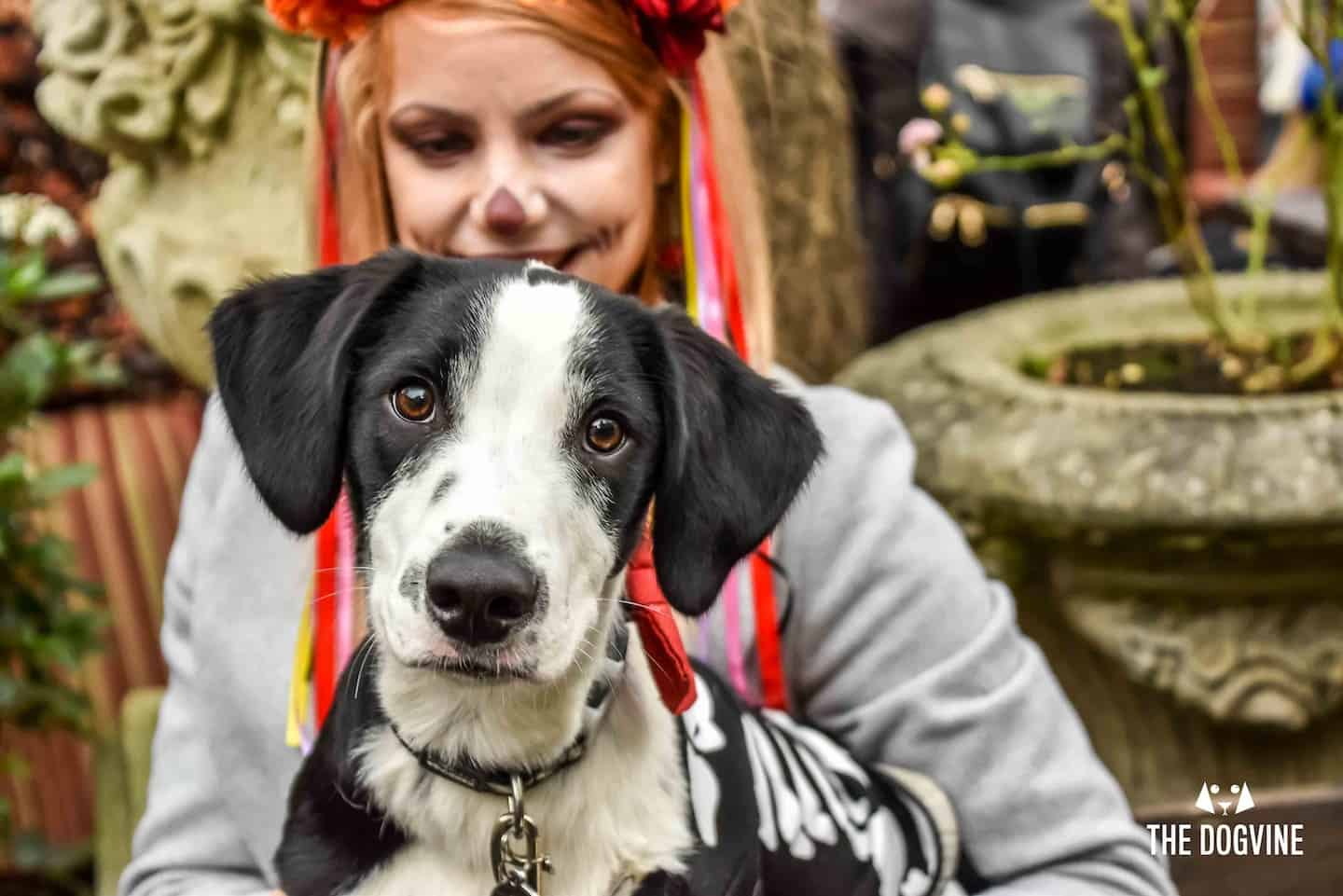 Dog Events In London This Month October 2018 Spooky Special Halloween Dog