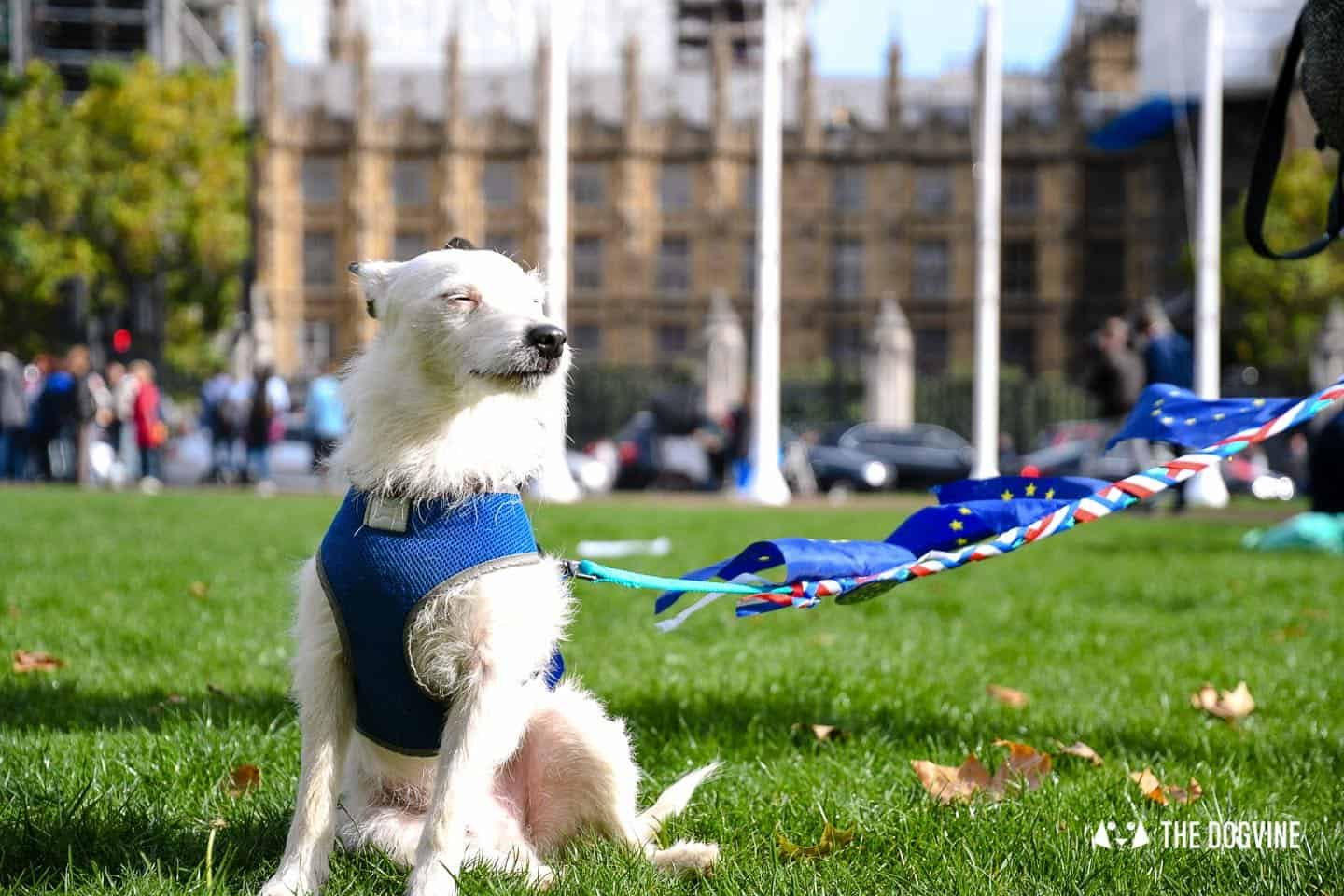 Dogs and Pups Protest at Westminster Brexit Wooferendum March In Pictures 127