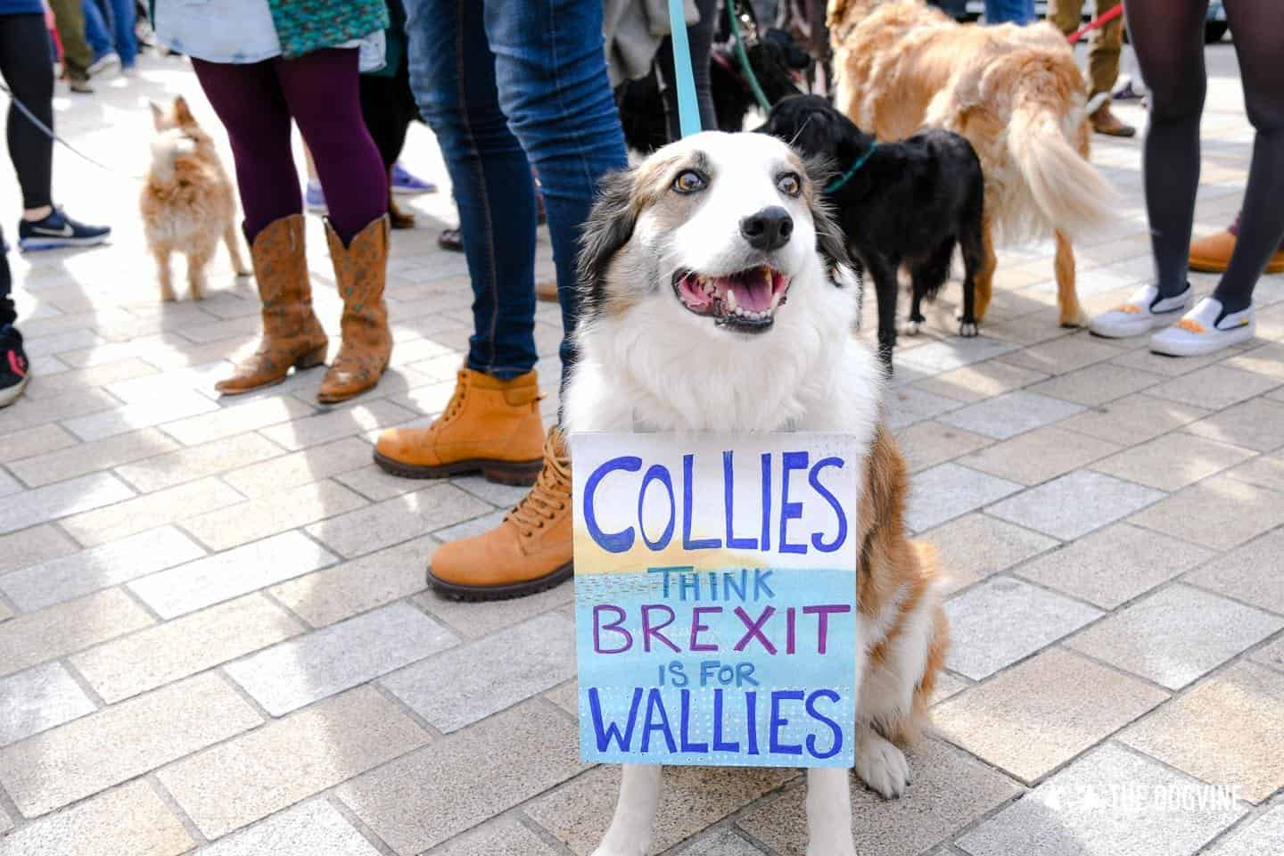 Dogs and Pups Protest at Westminster Brexit Wooferendum March In Pictures 3
