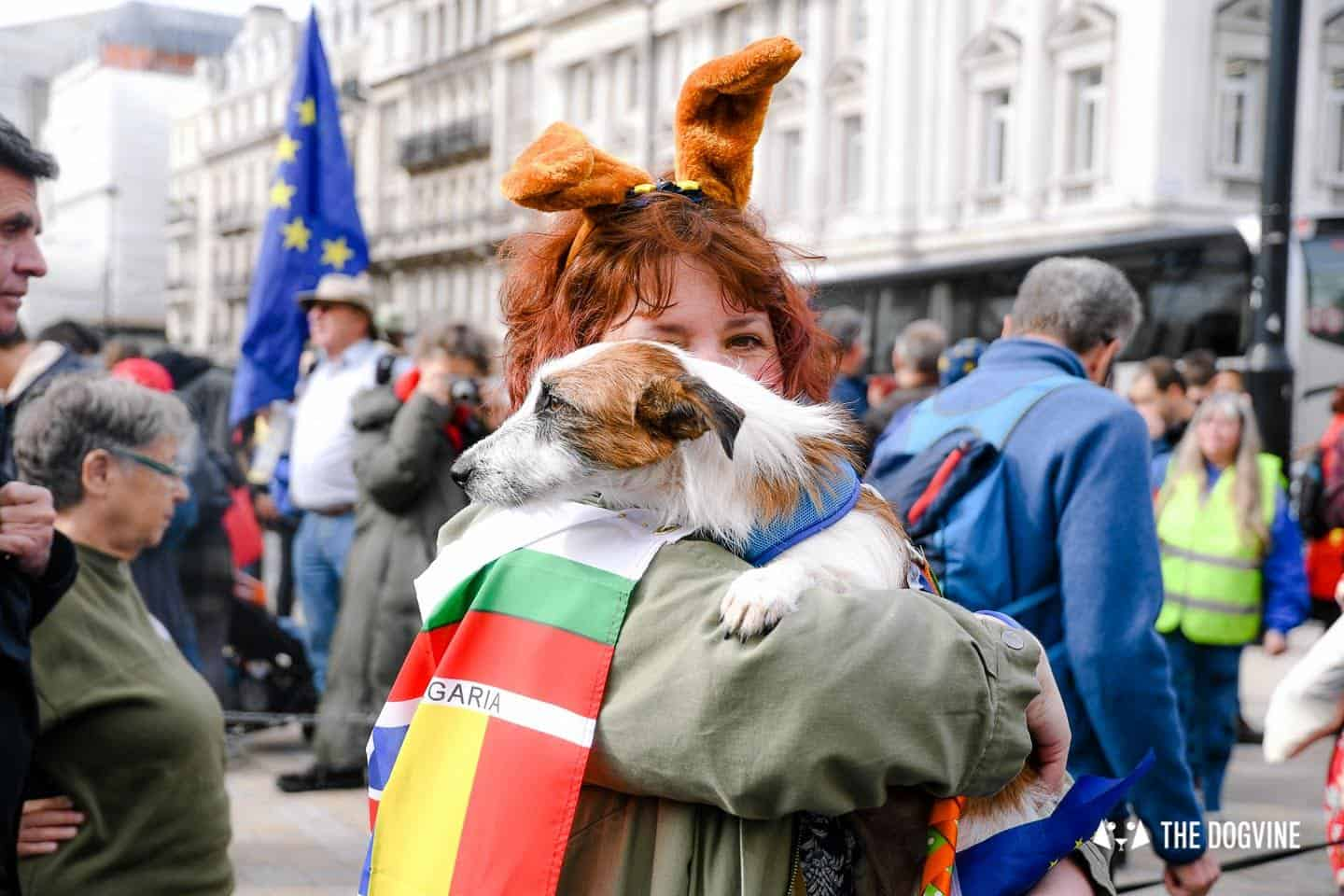 Dogs and Pups Protest at Westminster Brexit Wooferendum March In Pictures 34