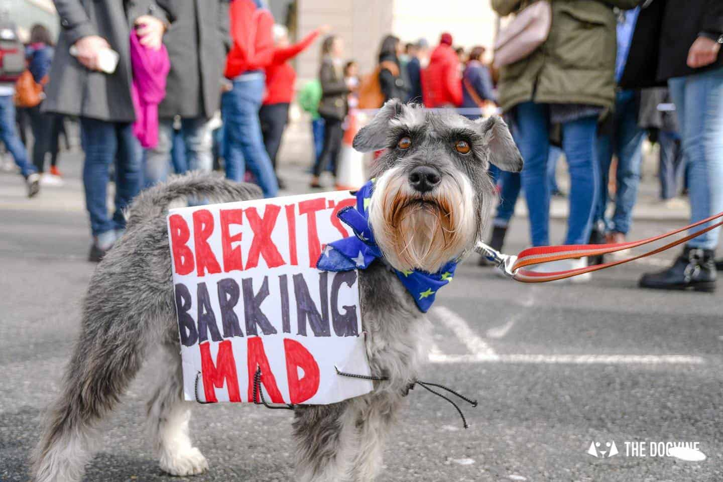 Dogs and Pups Protest at Westminster Brexit Wooferendum March In Pictures 38