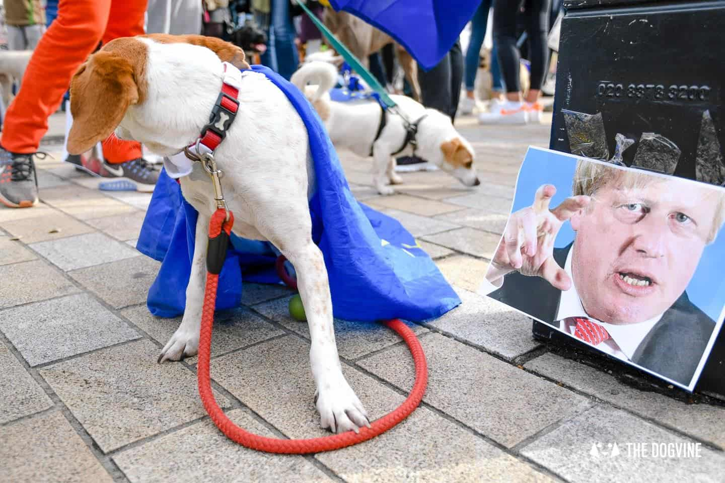 Dogs and Pups Protest at Westminster Brexit Wooferendum March In Pictures 41