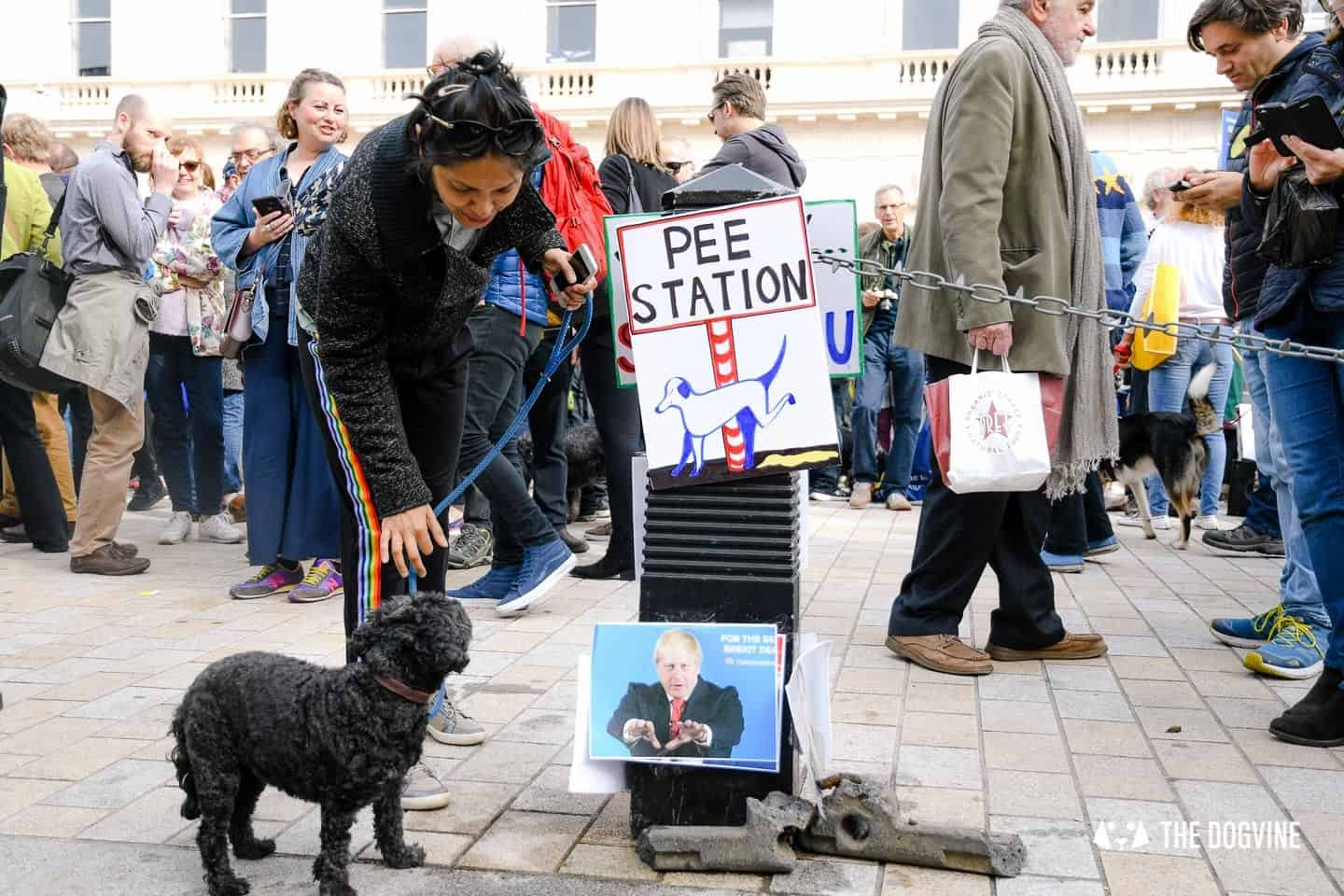 Dogs and Pups Protest at Westminster Brexit Wooferendum March In Pictures 53