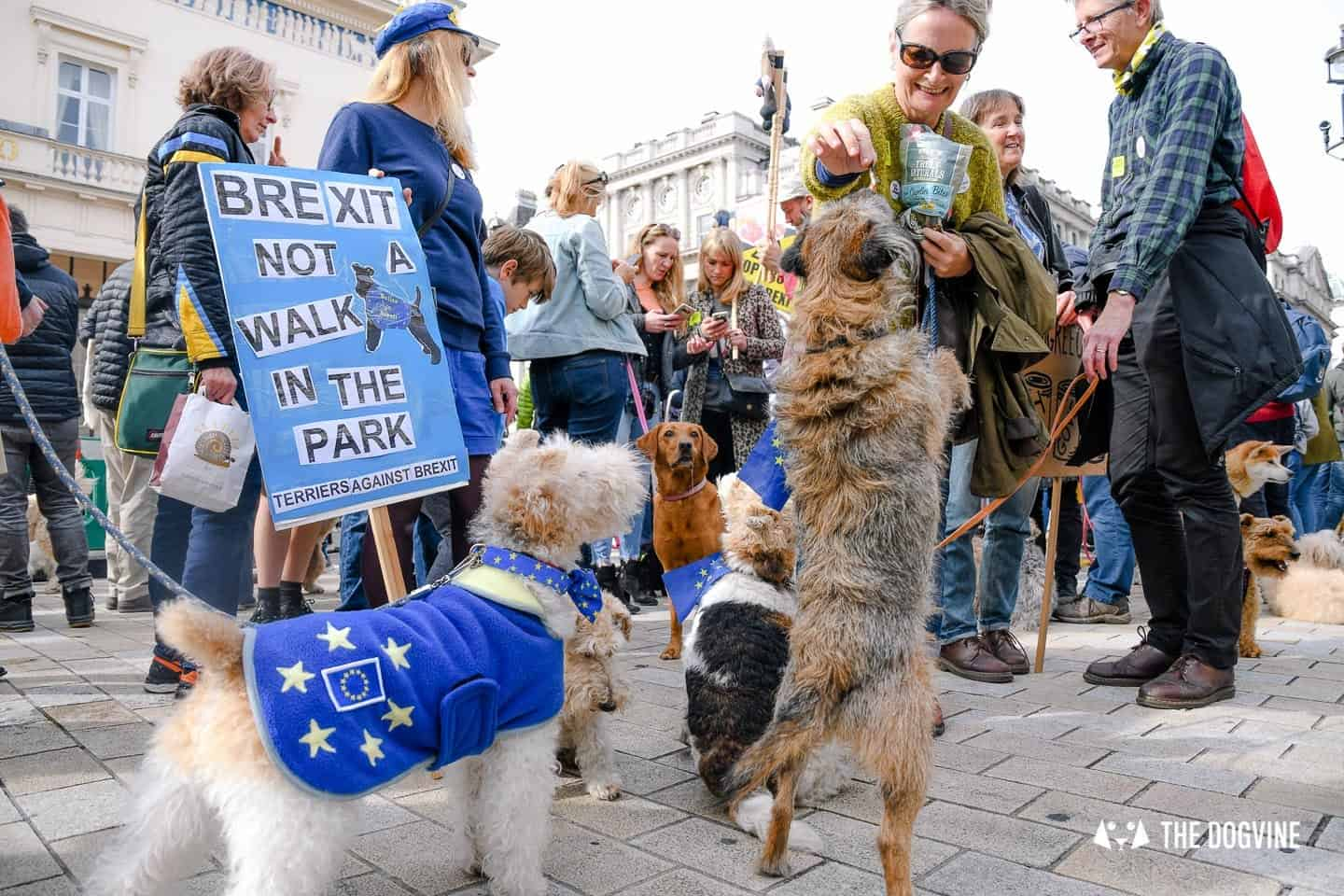 Dogs and Pups Protest at Westminster Brexit Wooferendum March In Pictures 58