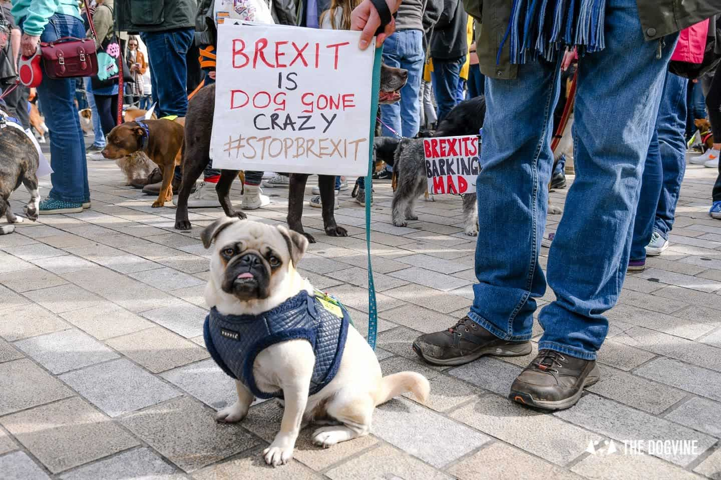 Dogs and Pups Protest at Westminster Brexit Wooferendum March In Pictures 74