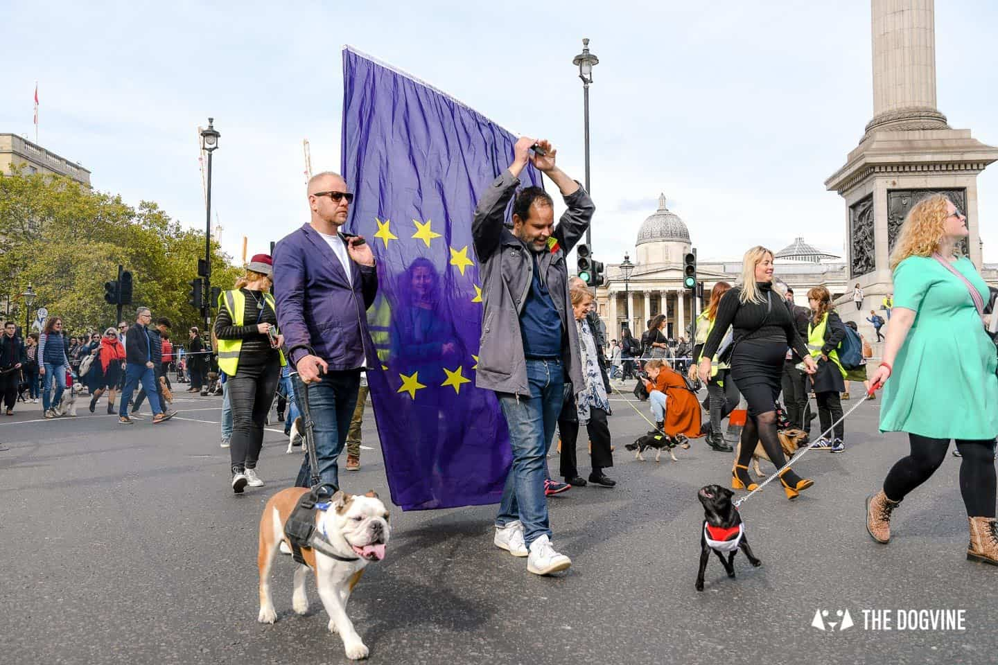 Dogs and Pups Protest at Westminster Brexit Wooferendum March In Pictures 85