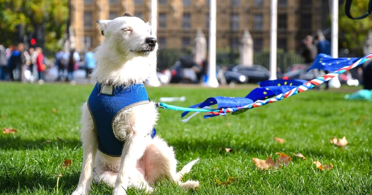 In Pictures | Pups Protest at Stop Brexit Wooferendum March