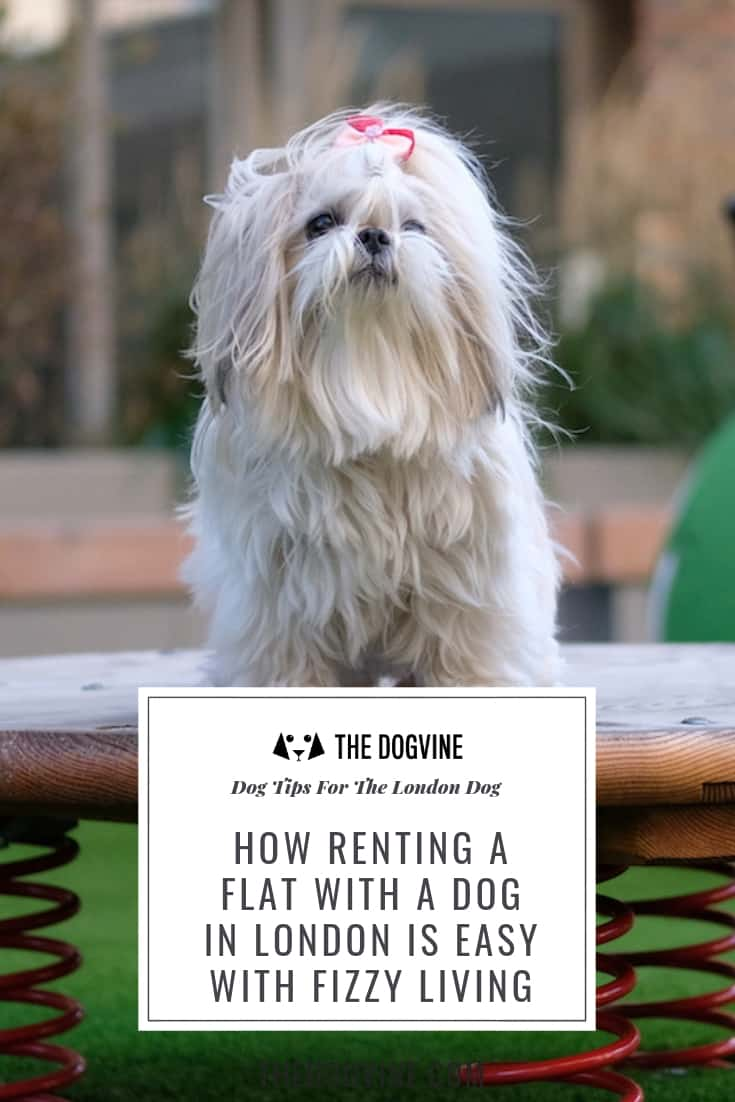 HOW RENTING A FLAT WITH A DOG IN LONDON IS EASY WITH FIZZY LIVING