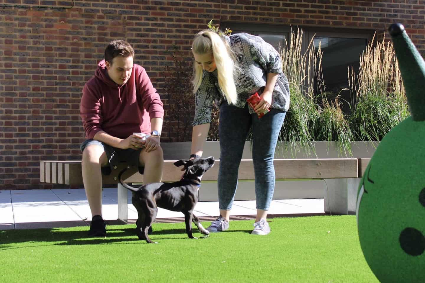 How Renting a Flat With a Dog in London Is Easy with Fizzy Living - Faye, Matthew and Layla the Staffordshire Bull Terrier
