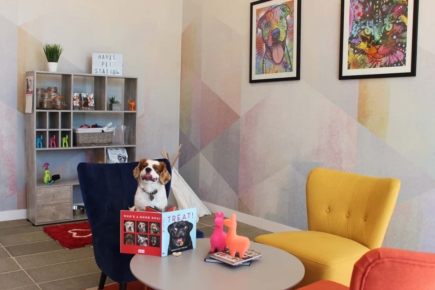 How Renting a Flat With a Dog in London Is Easy with Fizzy Living - Milo the Cavalier at the Pet Station