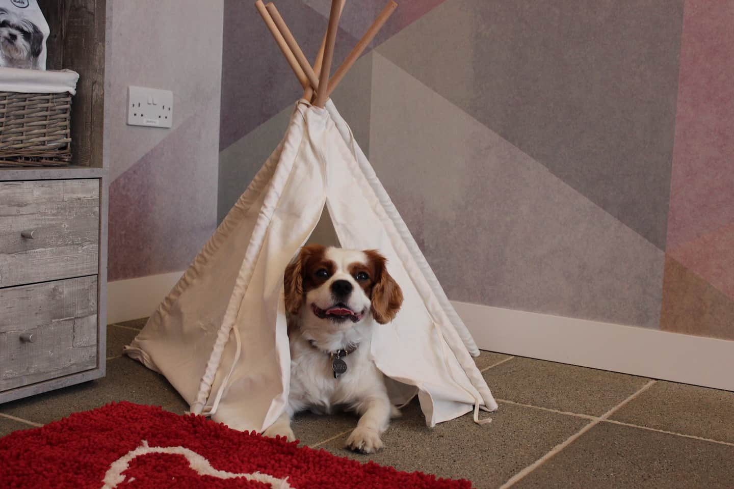 How Renting a Flat With a Dog in London Is Easy with Fizzy Living - Milo the Cavalier enjoying the pet perks
