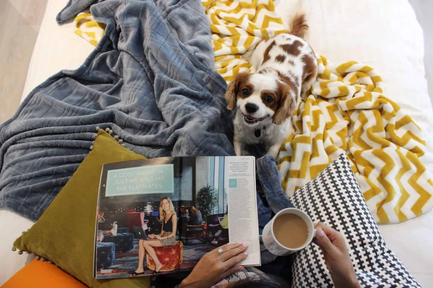 How Renting a Flat With a Dog in London Is Easy with Fizzy Living - Milo the Cavalier
