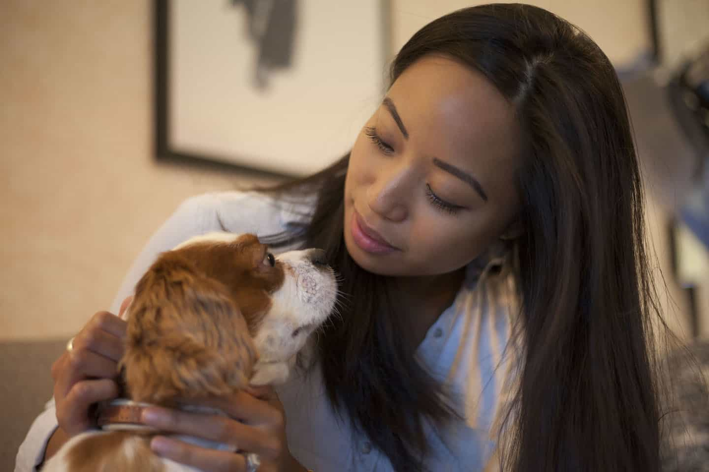 How Renting a Flat With a Dog in London Is Easy with Fizzy Living - Sophie and Milo the Cavalier