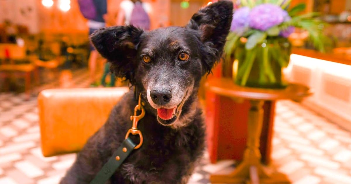 London Dog Events On This Week 18 – 25 October