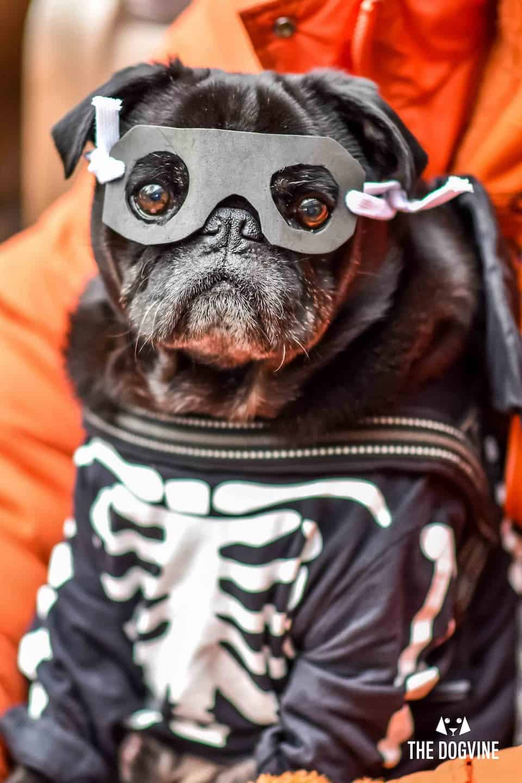 London Dog Events On This Week 26 - 31 October - Halloween Walk