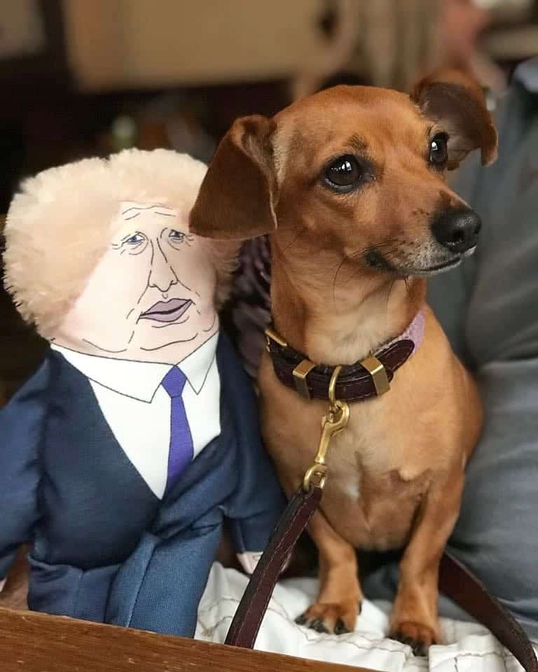 London Dogs To Bark Out Against Brexit on the Wooferendum March - Daphne with Boris Toy - Pet Hates Toys