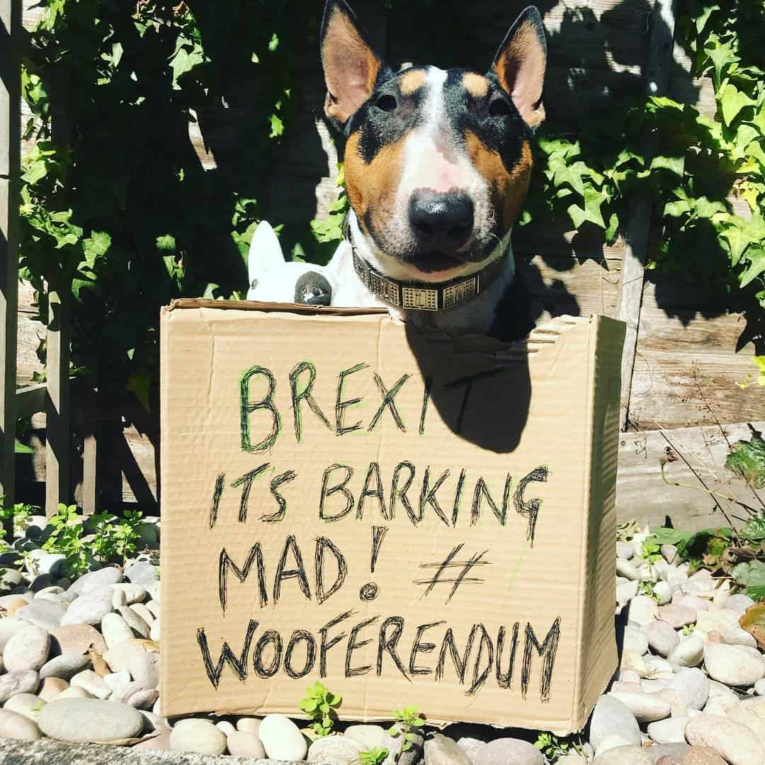 London Dogs To Bark Out Against Brexit on the Wooferendum March - Prudence - Anna Webb