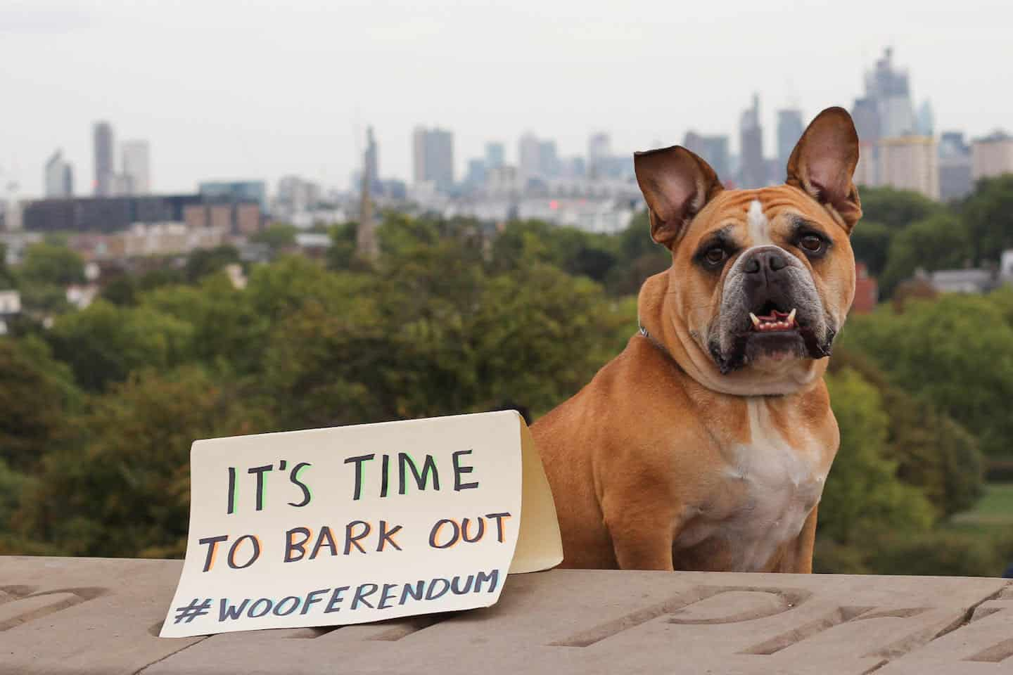 London Dogs Will Bark Out Against Brexit on the Wooferendum March - Owen London Bulldog