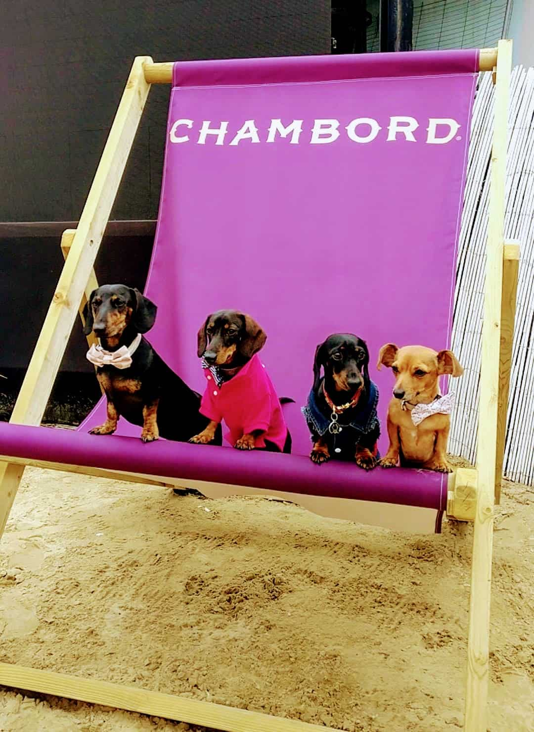 My Dog Friendly London Hammersmith & Fulham Daphne the Sausage Neverland Beach Club 1