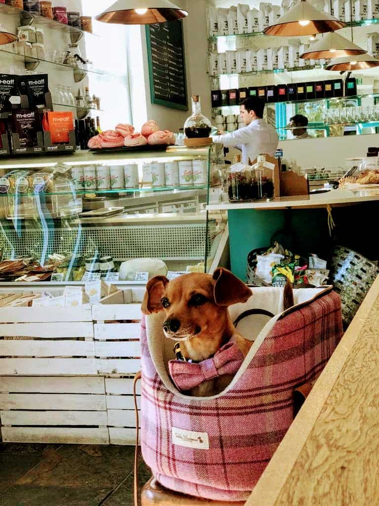 My Dog Friendly London Hammersmith & Fulham Daphne the Sausage The Corner House 2