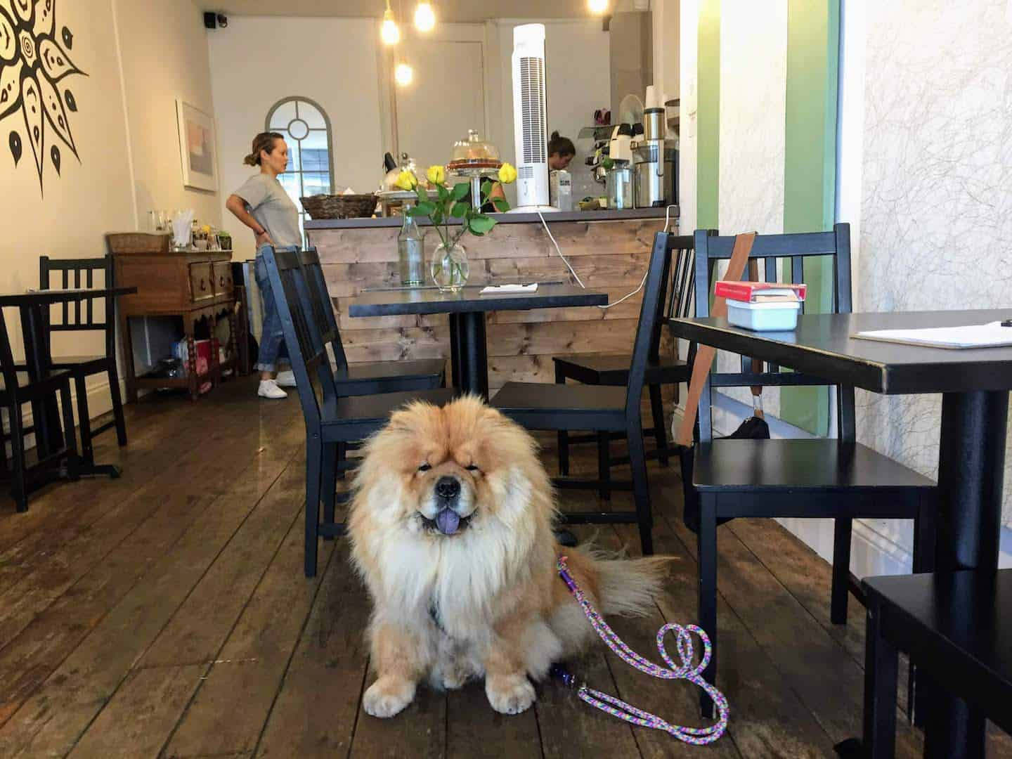My Dog Friendly London Richmond Clover the Chow Chow 10