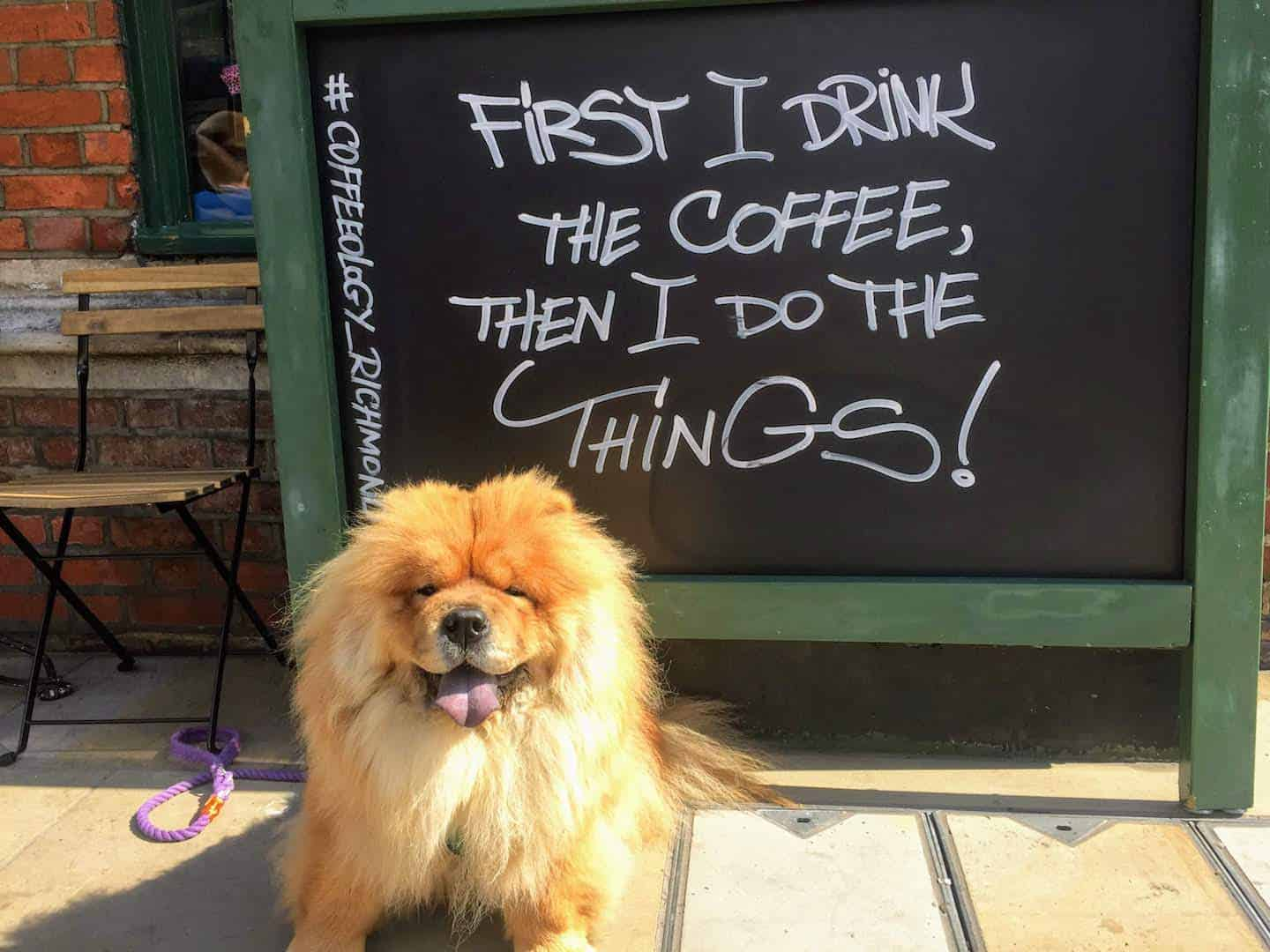 My Dog Friendly London Richmond Clover the Chow Chow 5