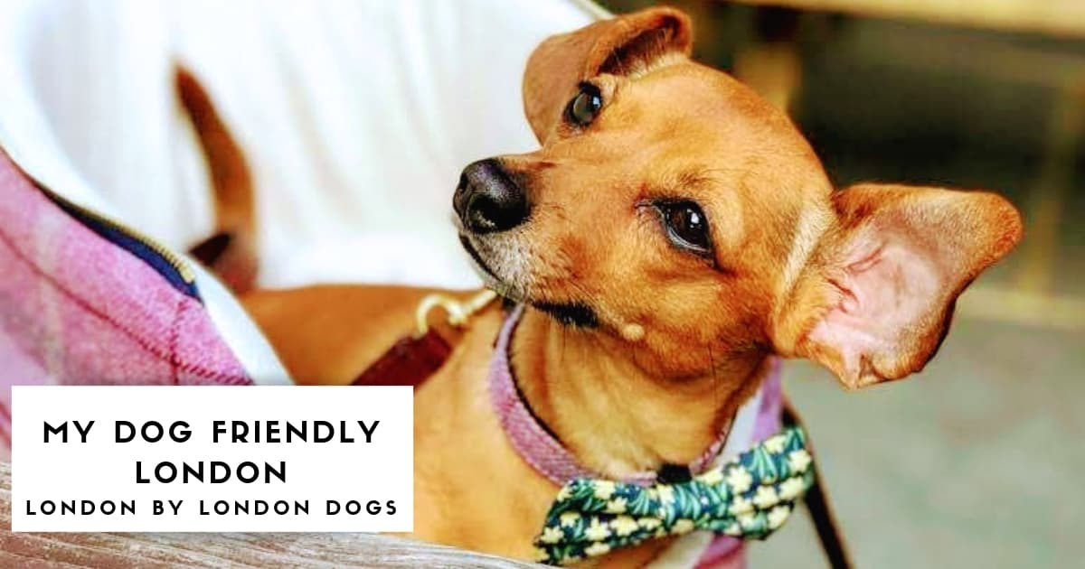My Dog-Friendly London _ London by London Dogs Features (1)