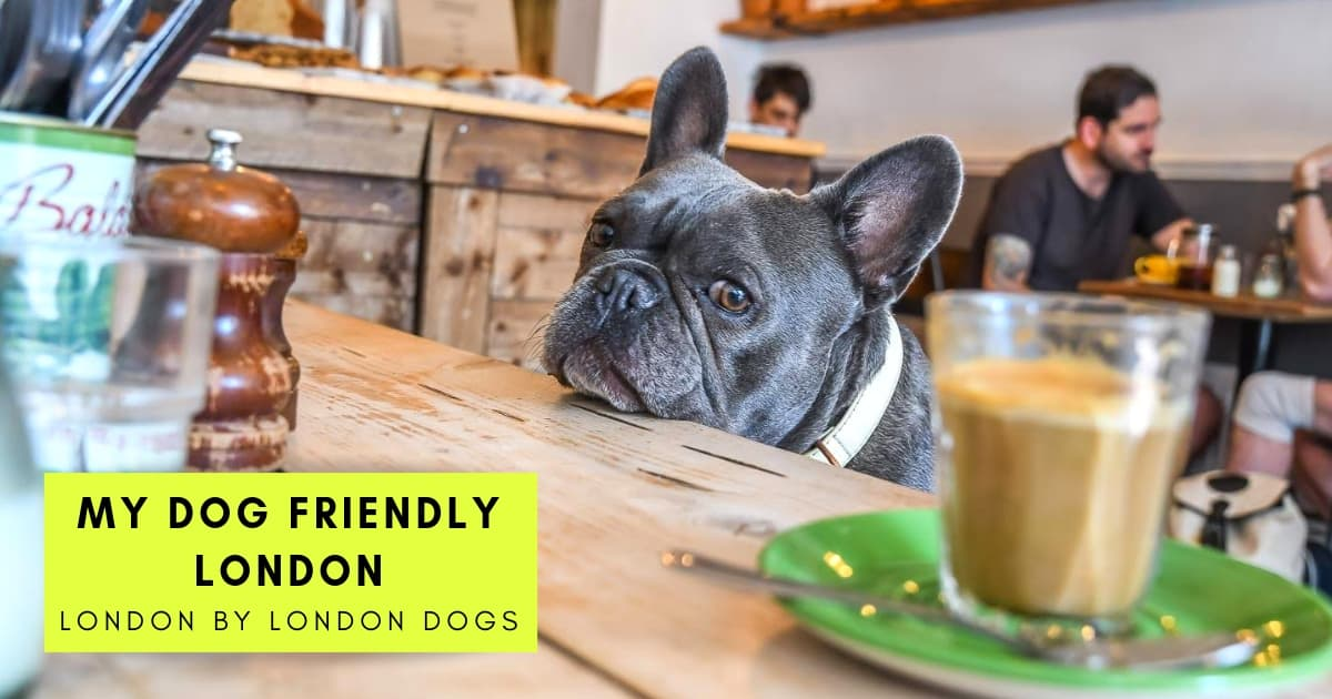 My Dog-Friendly London _ London by London Dogs Features