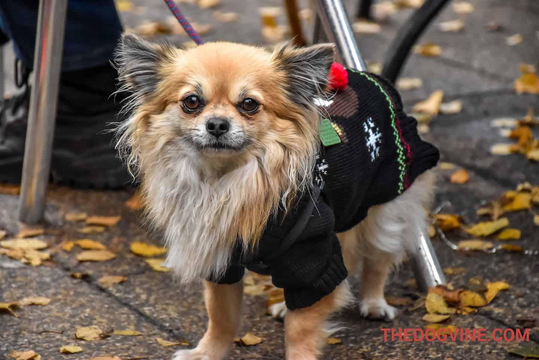 Primrose Hill Christmas Festival & Dog Show