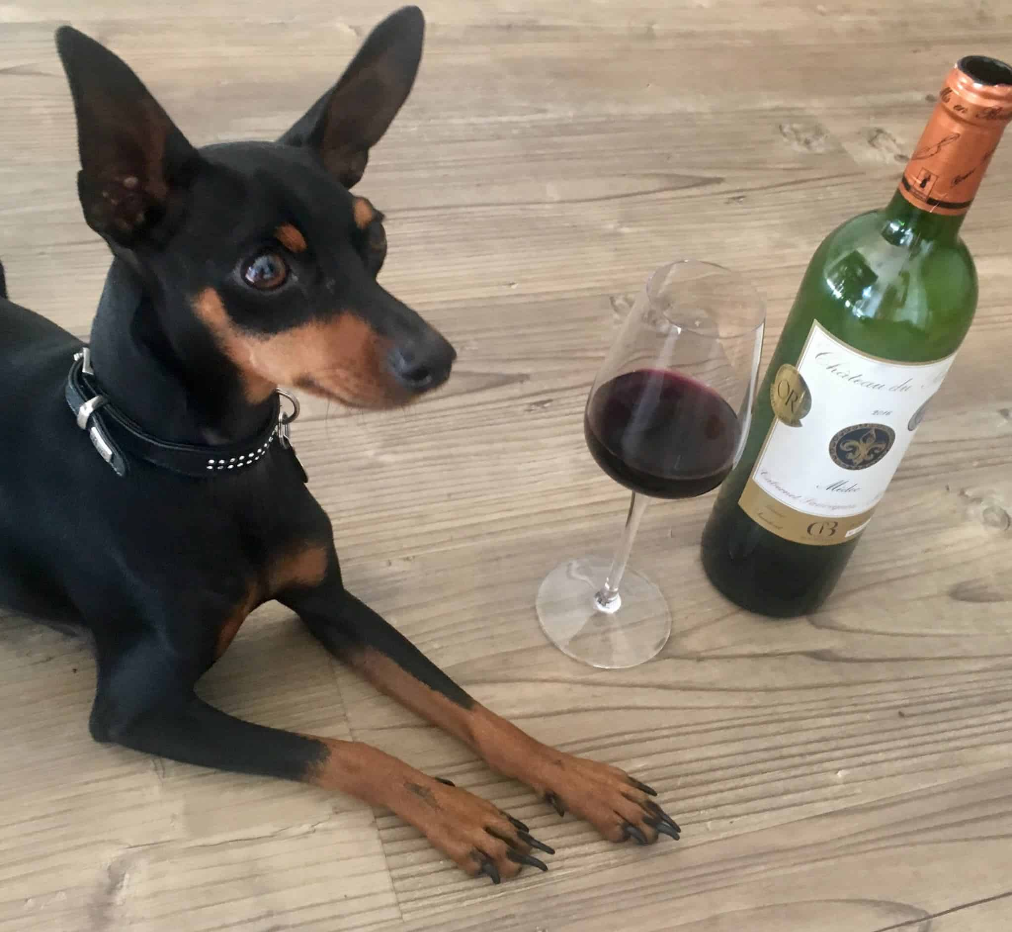 Wine & Canine Dog-friendly Wine Tasting