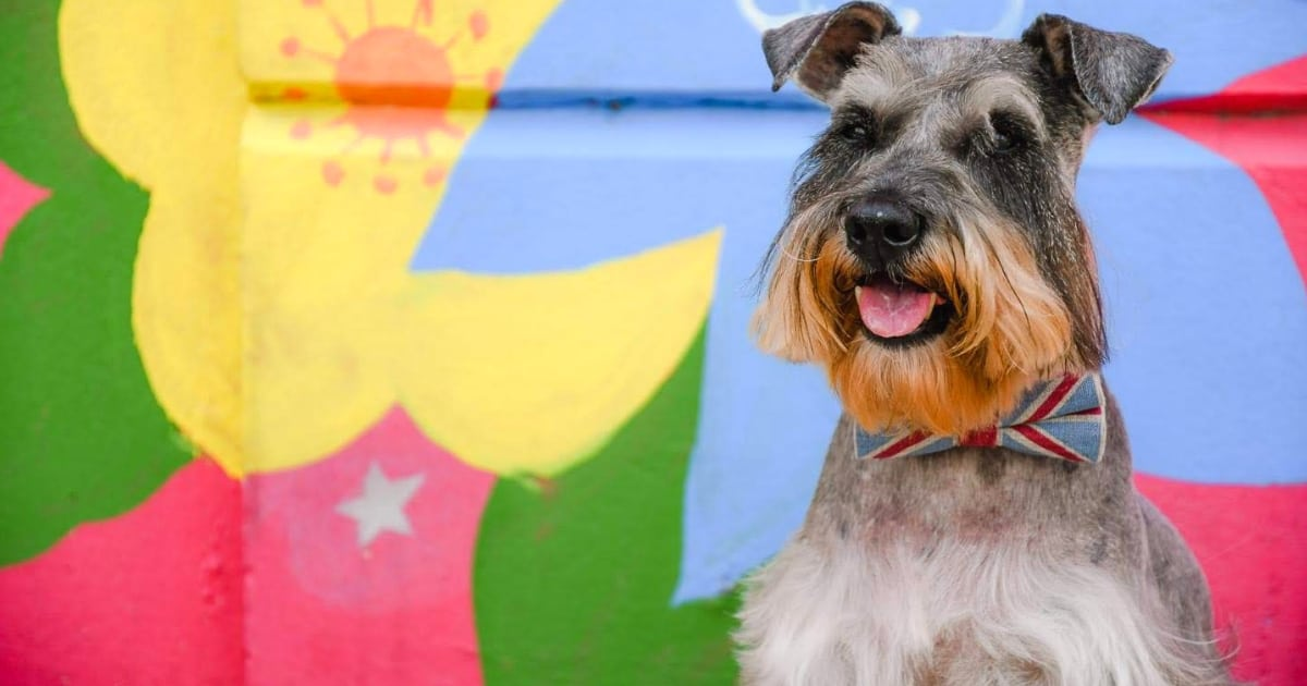 Your London Dog Events Agenda for 13-18 October