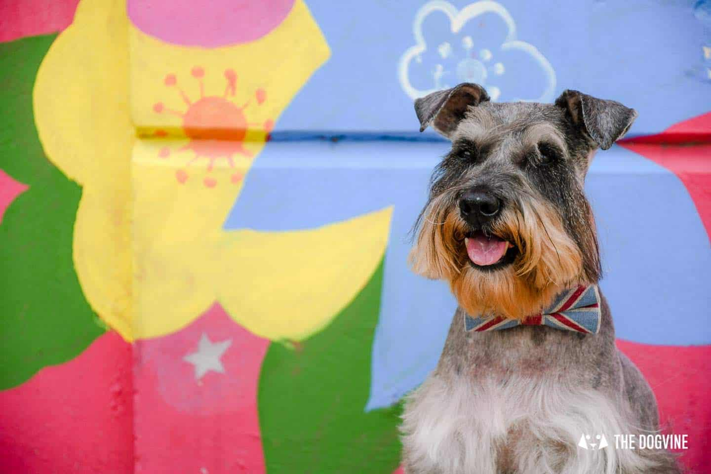 Your London Dog Events Agenda for 13-18 October - Pepper the Schnauzer
