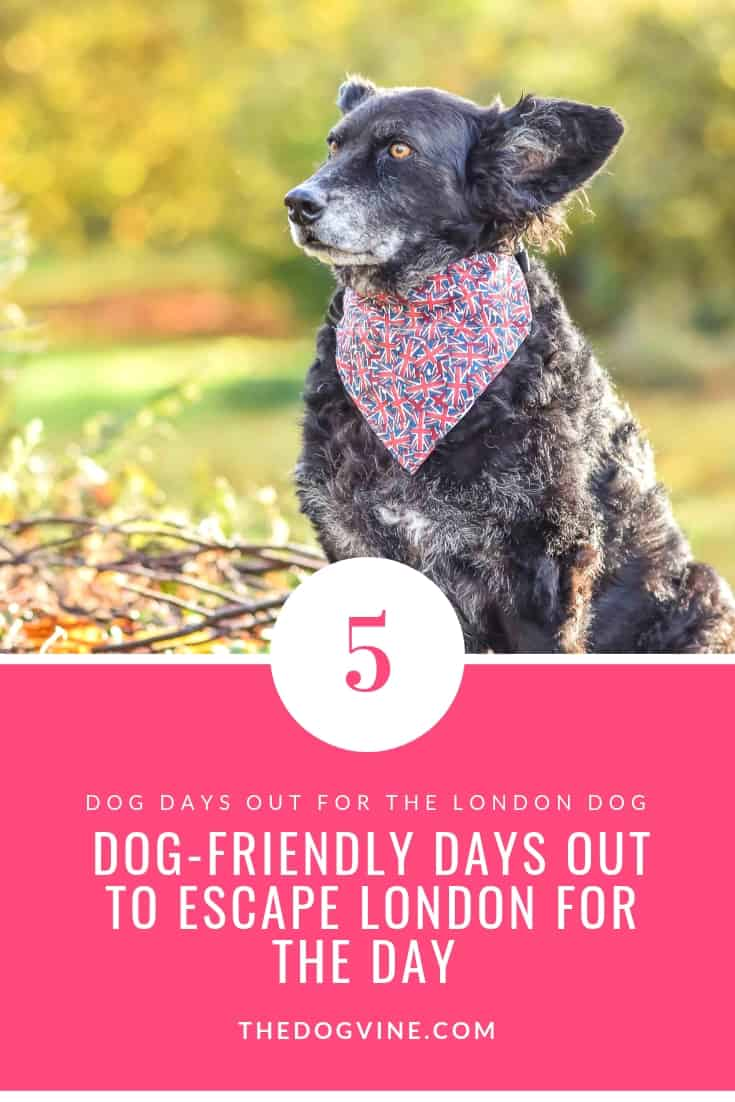 5 Dog-Friendly Days Out To Escape London For The Day - Dog Days Out