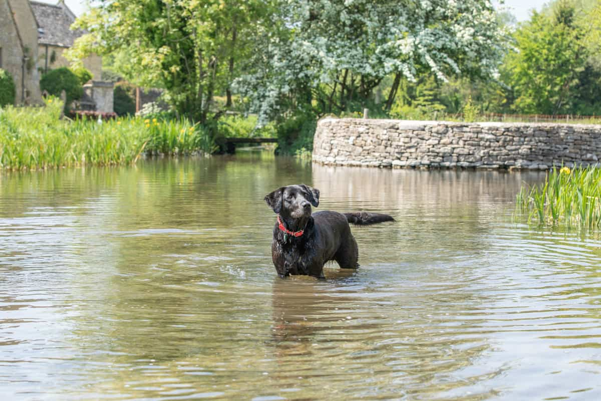 5 Dog-friendly Getaways within 2 hours of London - Cotswolds