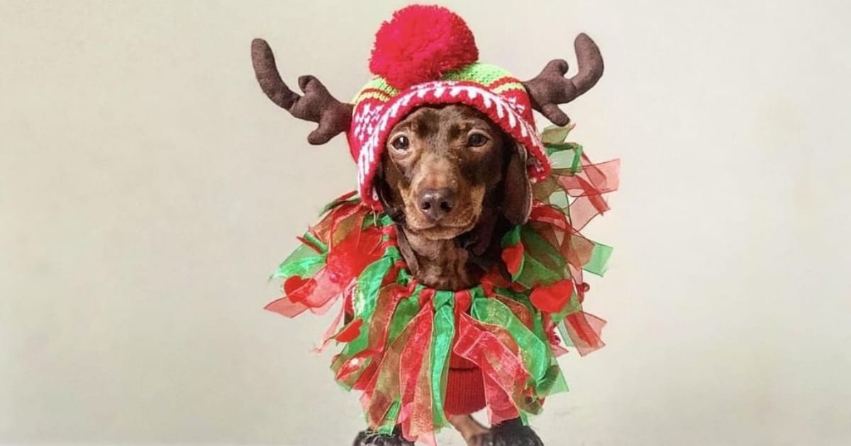 A Christmas Gift Guide For Dog Divas