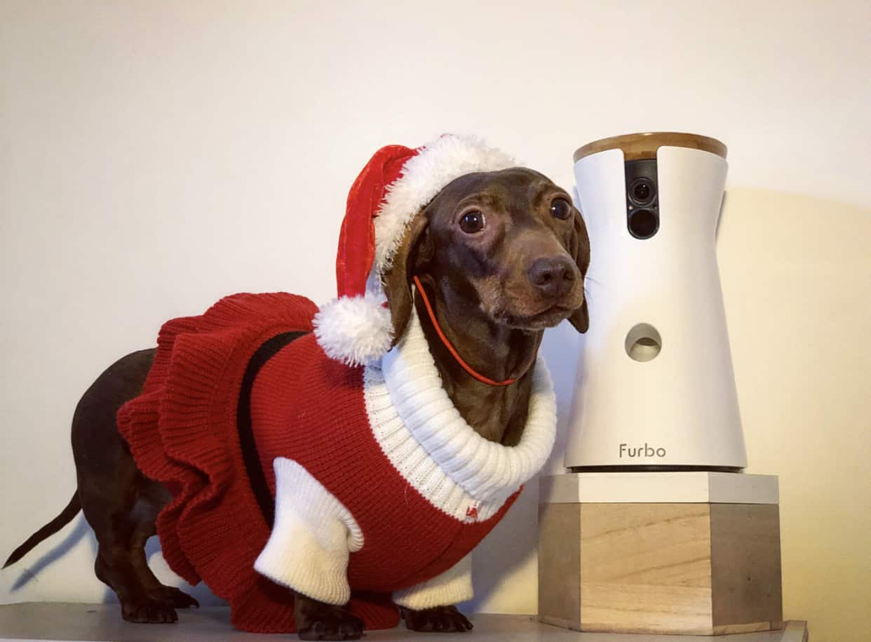 A Christmas Gift Guide For Dog Divas | Furbo