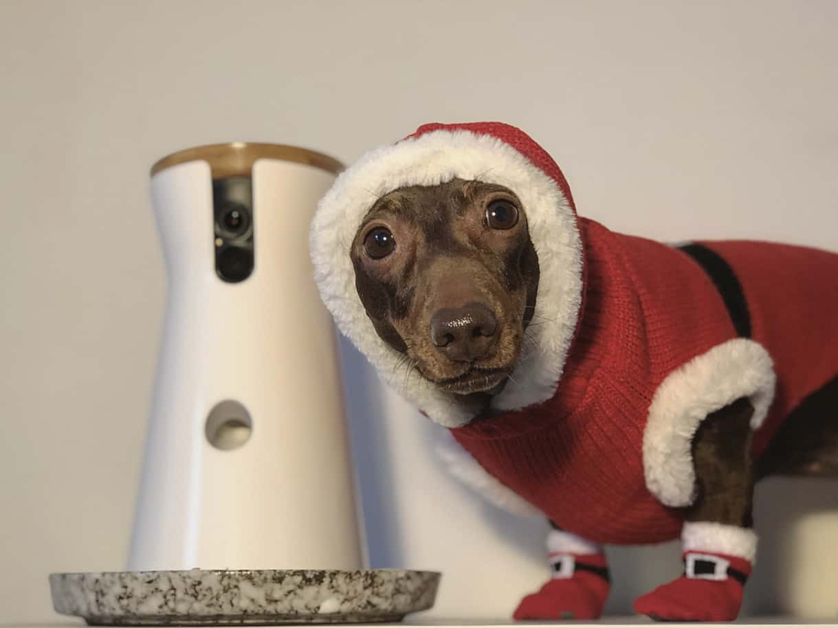 A Christmas Gift Guide For Dog Divas | Furbo Pops
