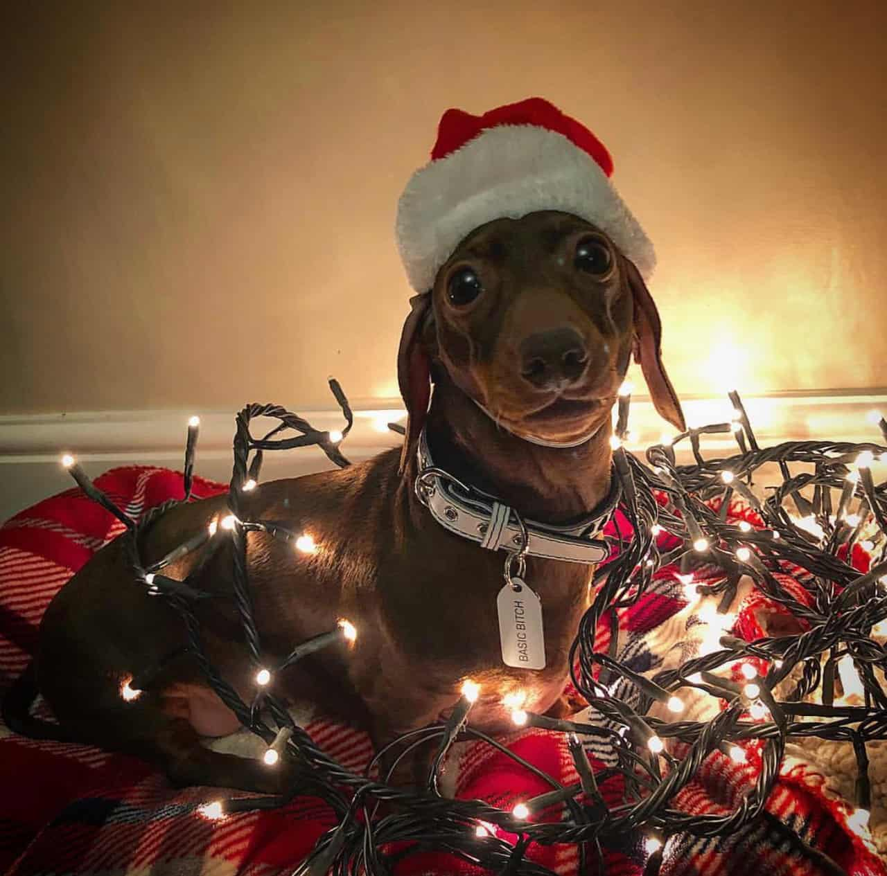 A Christmas Gift Guide For Dog Divas | Growlees Xmas Pops