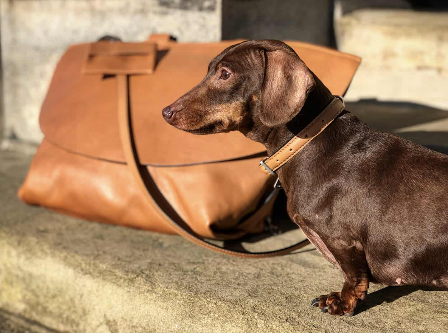A Christmas Gift Guide For Dog Divas | Growlmama London Carry in Camel