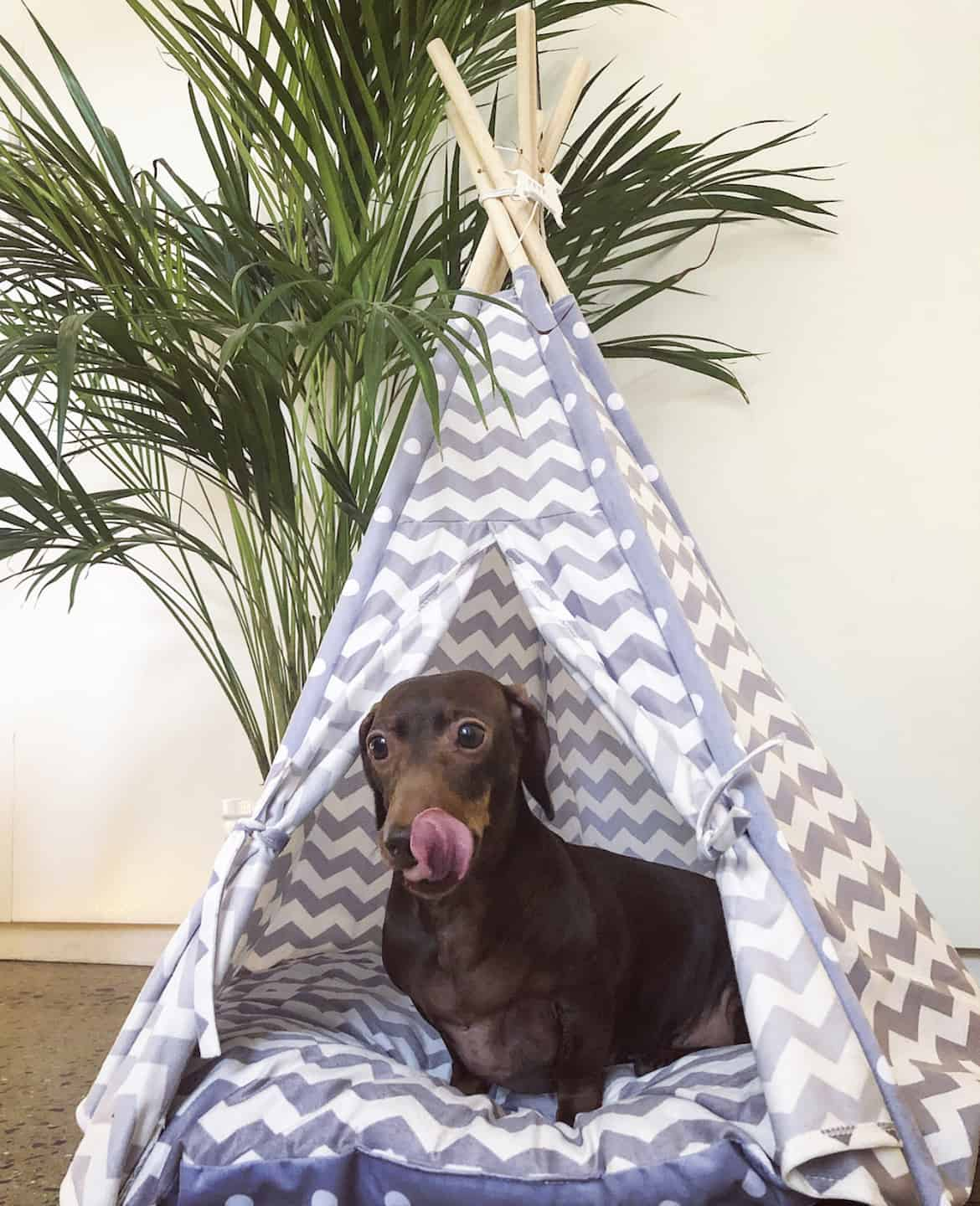 A Christmas Gift Guide For Dog Divas | Me and My Pets Pet TeePee