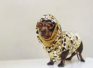 Moschino Padded Jacket For Dogs