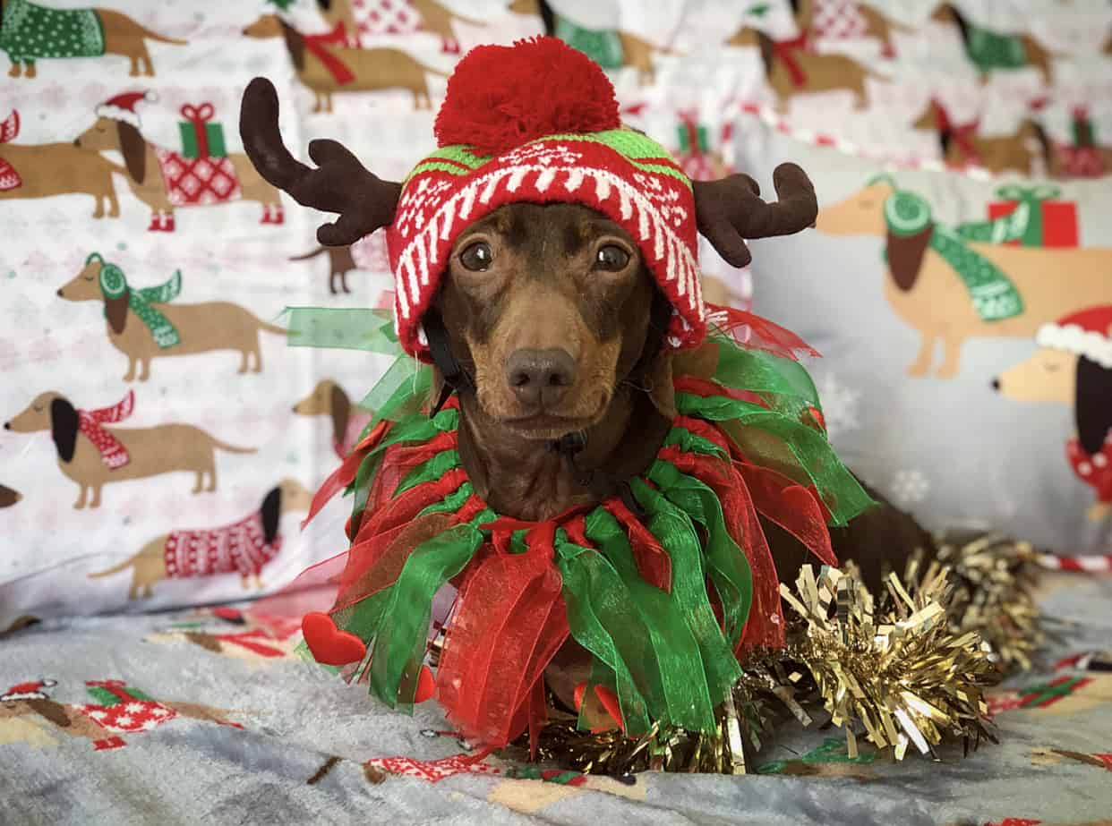 A Christmas Gift Guide For Dog Divas - Xmas Pops
