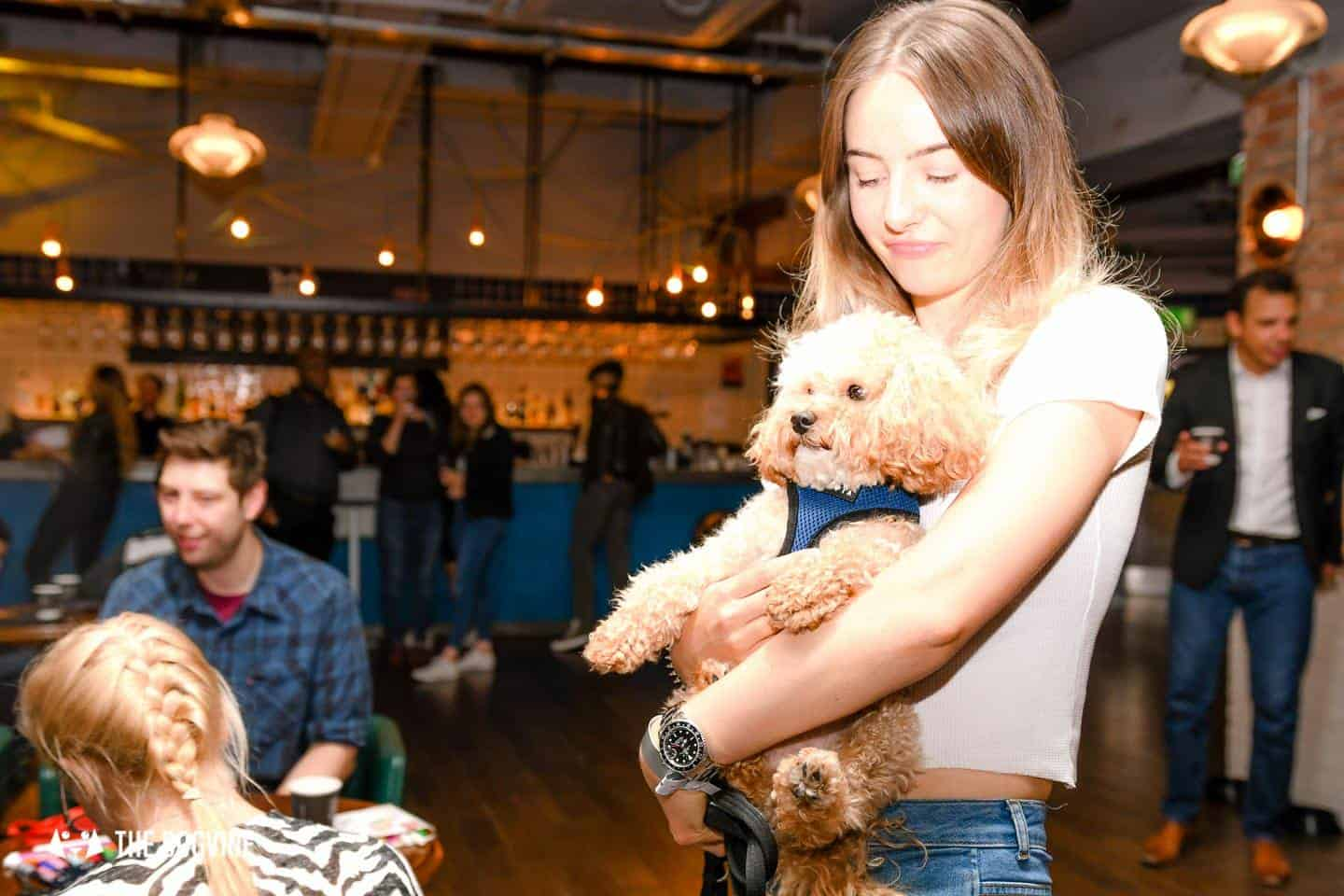 Clapham Picturehouse Dog-Friendly Cinema Fantastic Beasts