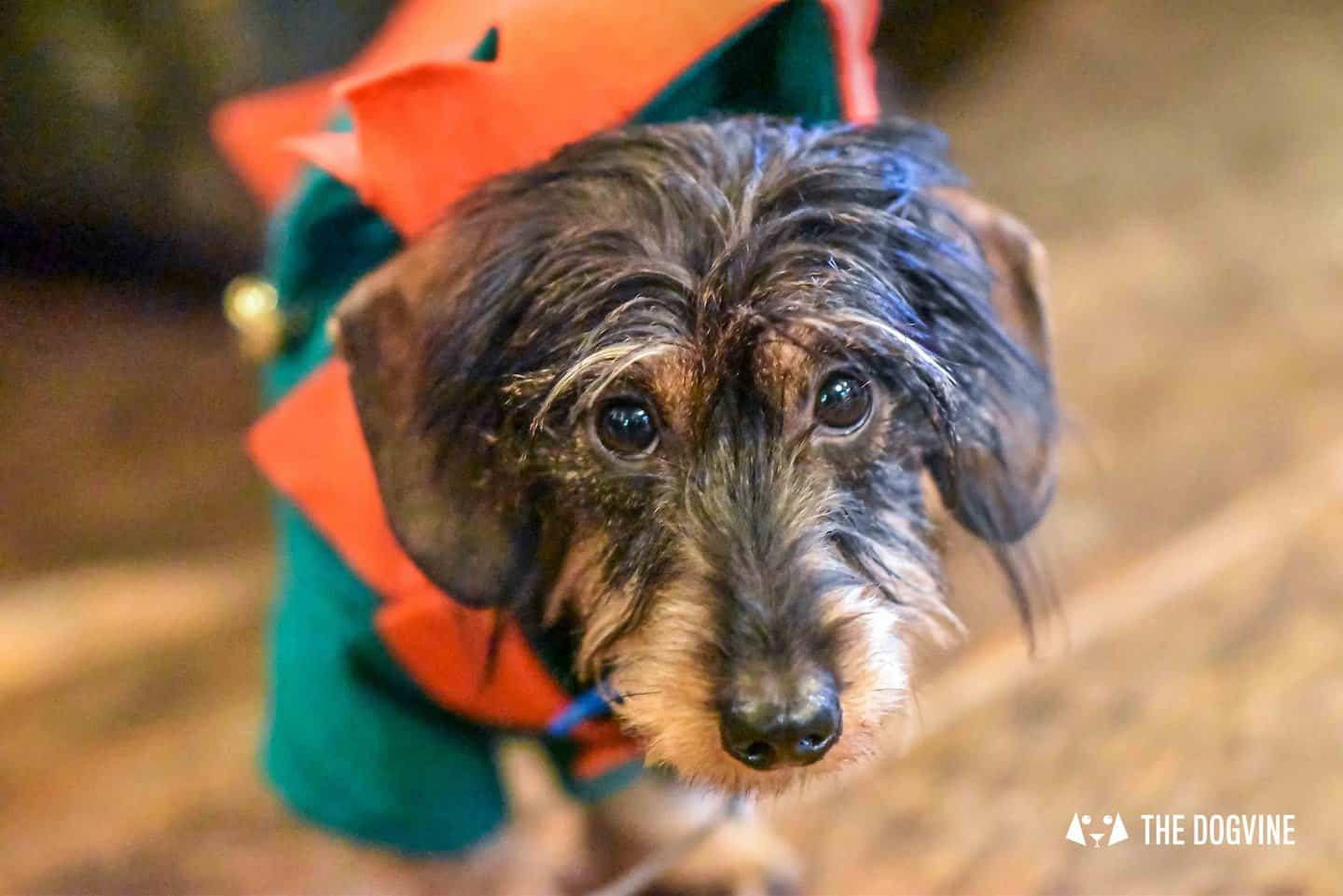 Dog Events In London Christmas 2018 Edition - Doggy Elf
