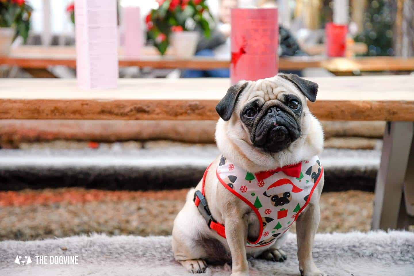 Dog Events In London Christmas 2018 Edition - Gizzi The Santa Pug