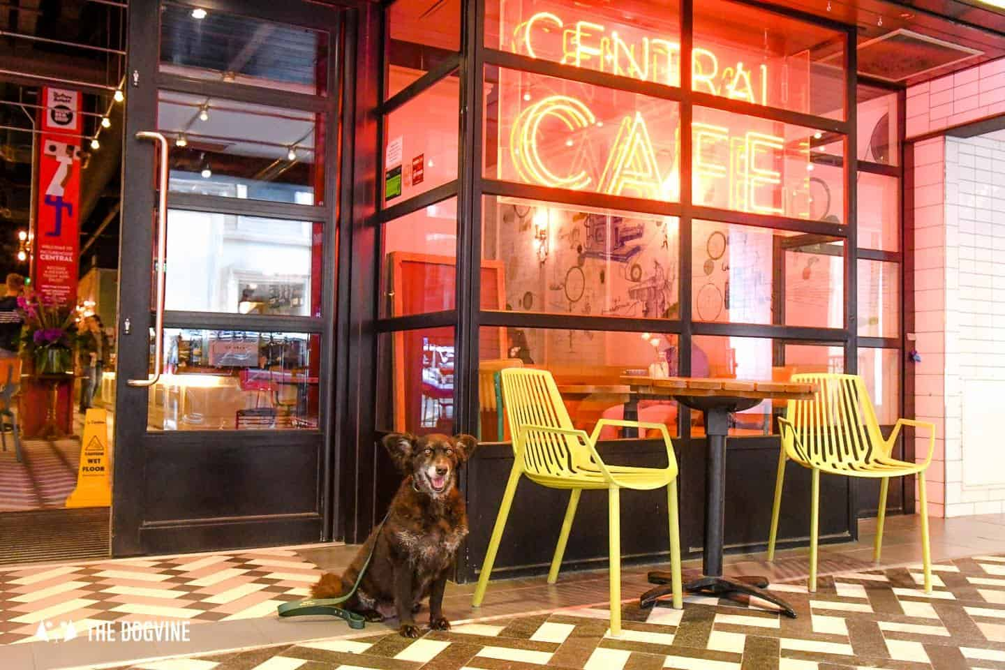 Dog-Friendly Cinema Picturehouse Central November 2018