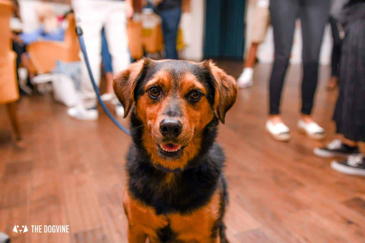 Dog-Friendly Cinema Picturehouse East Dulwich   Fantastic Beasts