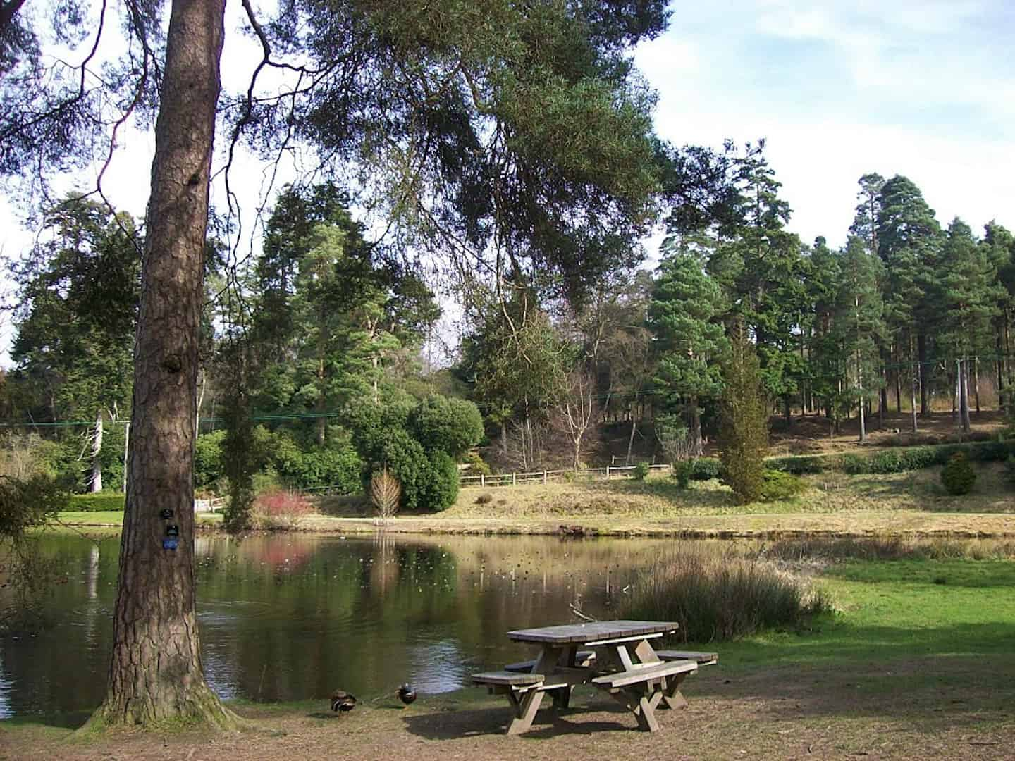 Dog-Friendly Days Out To Escape London For The Day - Bedgebury Pinetum