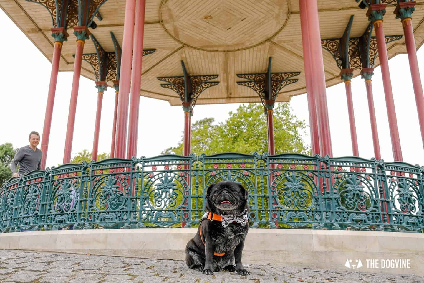My Dog-friendly London Clapham & Battersea By Hemingway The Pug Clapham Common Bandstand 2